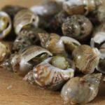 Lumache di mare: come si puliscono