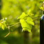 Sostenibilità ambientale e vino: dalla qualità al rispetto per la natura